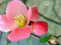 Fiore 5